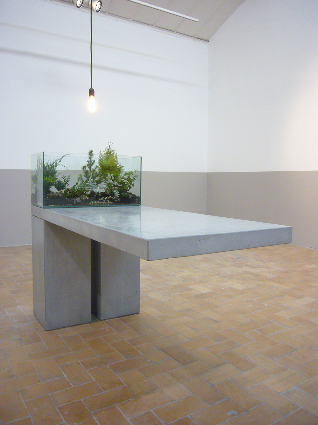 Andrea Blum - Table rock plant, 2013